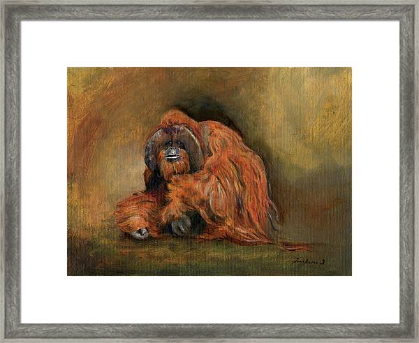 Orangutan Monkey Framed Print
