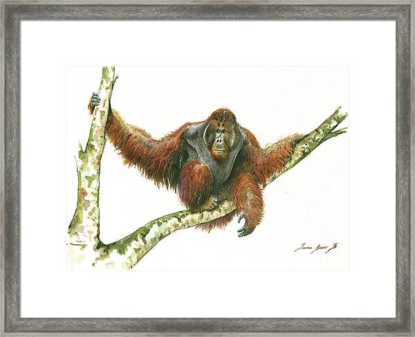 Orangutang Framed Print