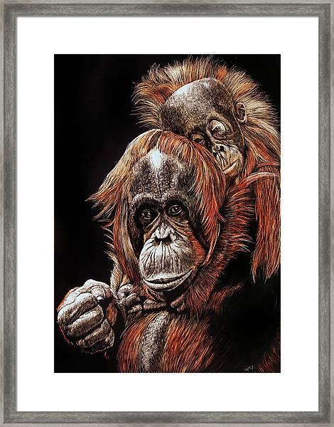 Orangutans Two Framed Print