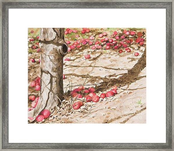 Orchard Afternoon Framed Print by Carla Dabney