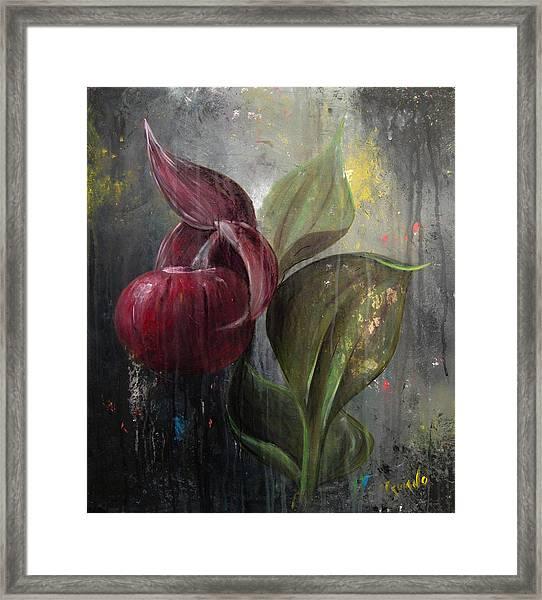 Orchid Bulb Framed Print by Matt Truiano