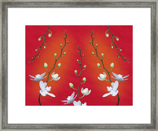 Orchid Ensemble Framed Print