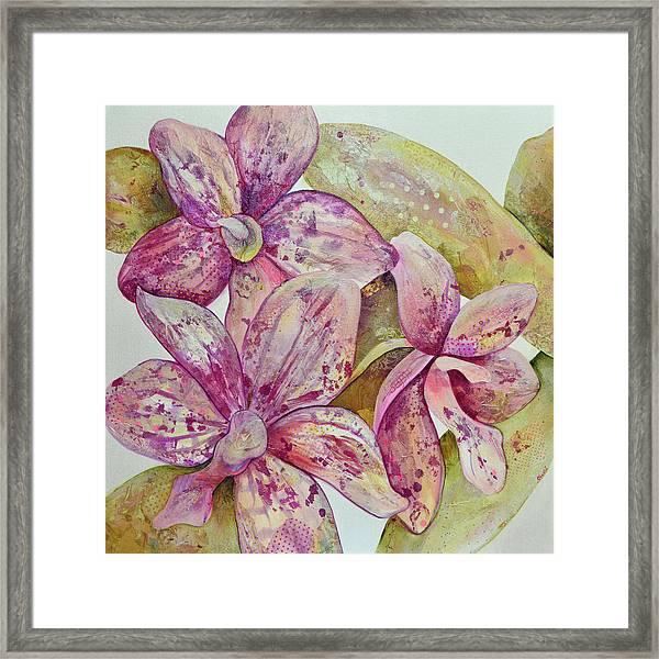 Orchid Envy Framed Print