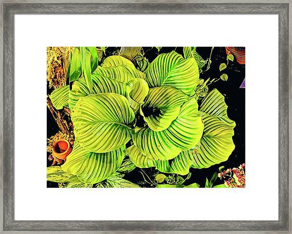 Orchid Green Fade Aloha  Framed Print