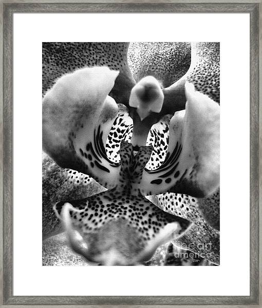 Orchid In Black And White Framed Print