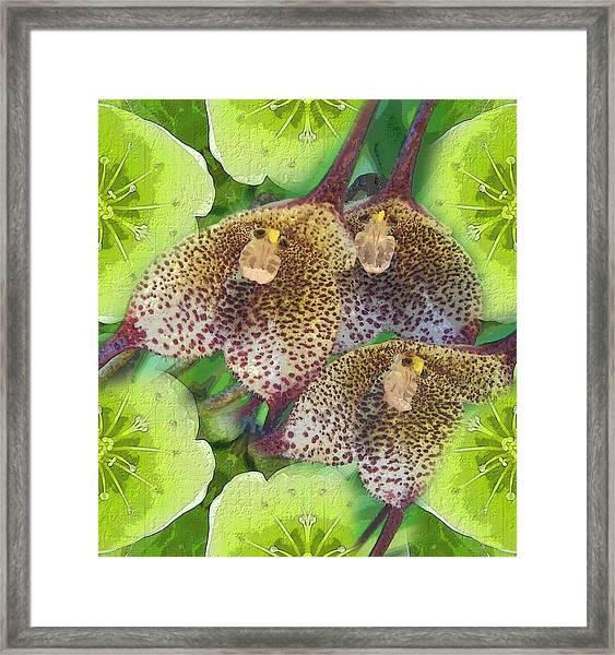 Orchid Monkeys Framed Print