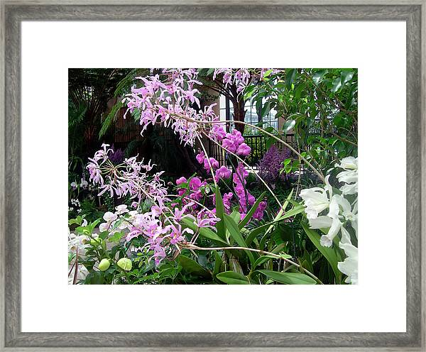 Orchid Sprays In The Atrium Framed Print