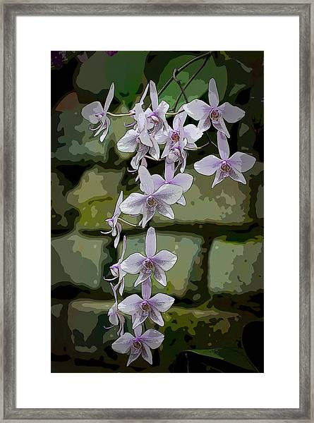 Orchid Waterfall Framed Print