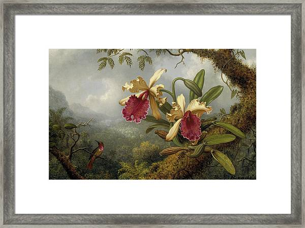 Orchids And Hummingbird Framed Print