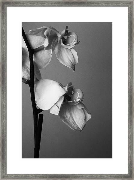 Orchids - April 2009 Framed Print