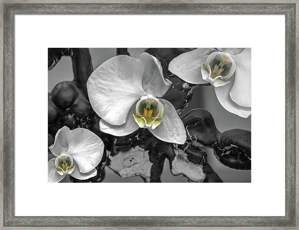 Orchids Elegant Delicate Beauties Framed Print