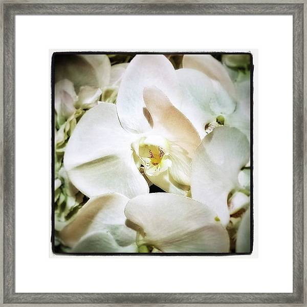 Orchids For His Majesty. In Loving Framed Print by Mr Photojimsf