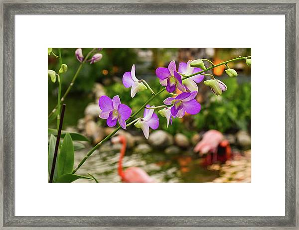 Orchids In Paradise Framed Print