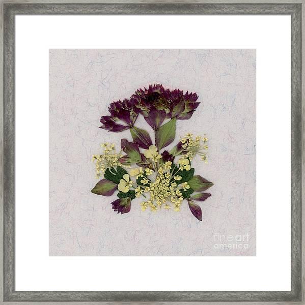 Oregano Florets And Leaves Pressed Flower Design Framed Print