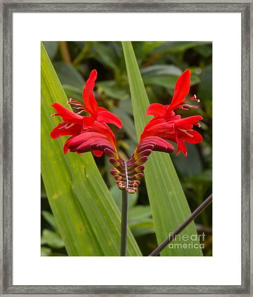 Oregon Flower 1 Framed Print