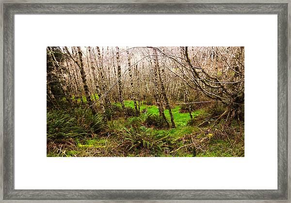Oregon Rainforest Framed Print