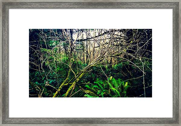 Oregon Rainforest II Framed Print