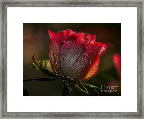 Organic Rose Framed Print