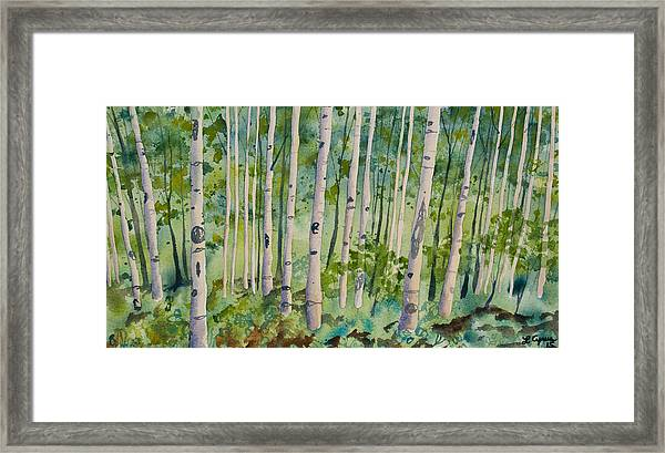 Original Watercolor - Summer Aspen Forest Framed Print