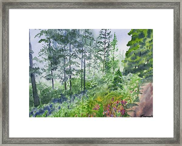 Original Watercolor - Summer Pine Forest Framed Print