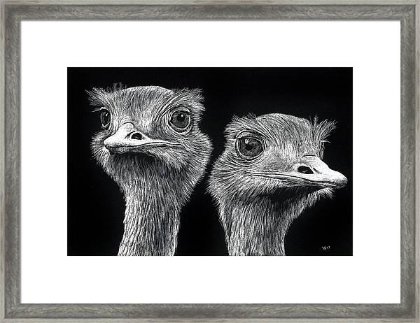 Ostrich Pair Framed Print