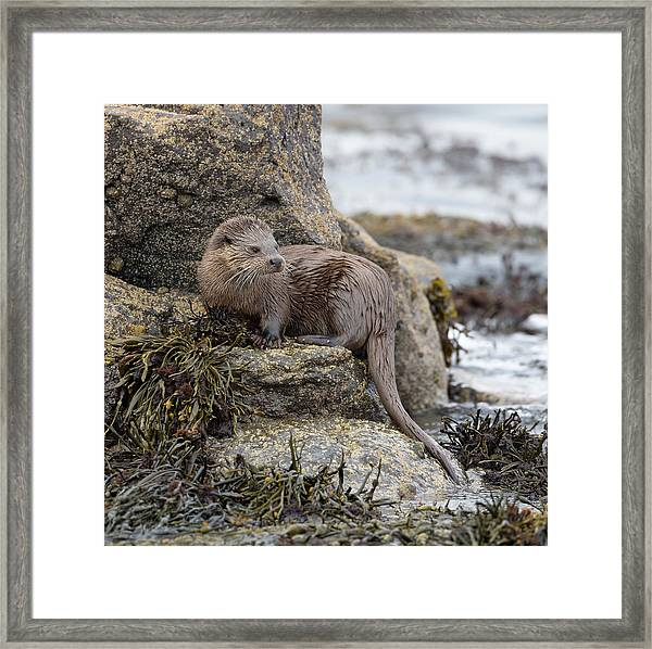 Otter Beside Loch Framed Print