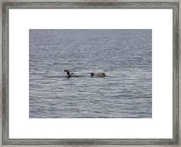 Otter On The Bay Framed Print