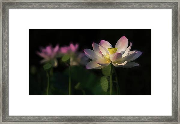 Out Of The Mud Framed Print