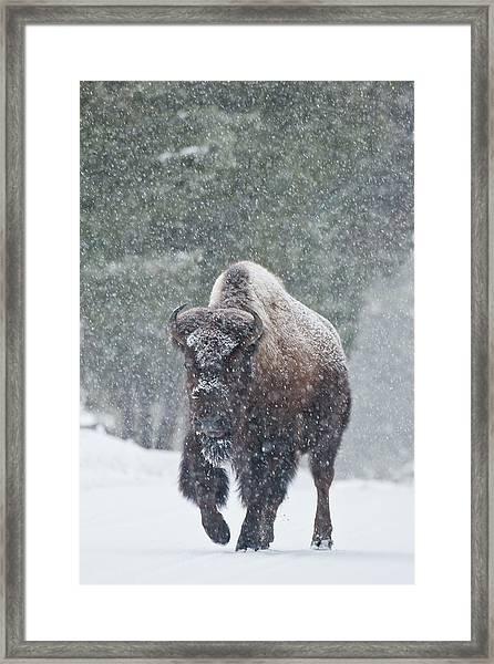 Out Of The Snow Framed Print