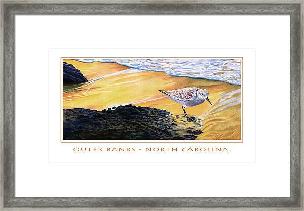 Outer Banks Sanderling Framed Print by Bob Nolin