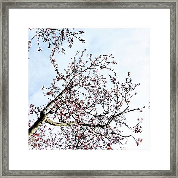 Overhead Branches Framed Print