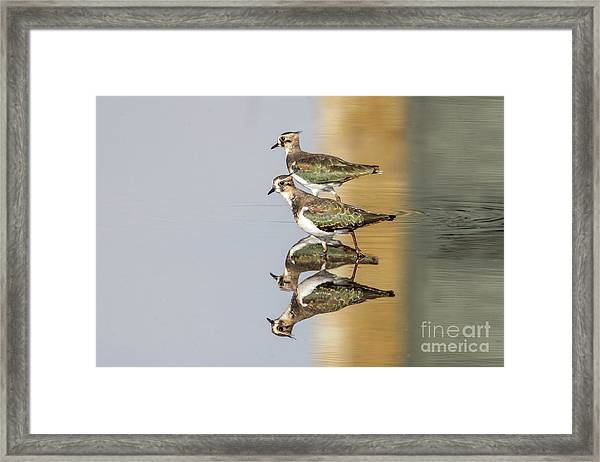 Overlappwing Framed Print