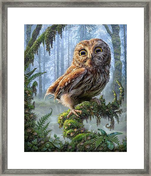 Owl Perch Framed Print