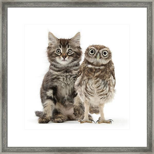 Owling And Yowling Framed Print