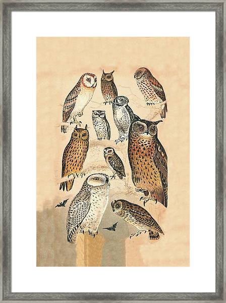 Framed Print featuring the mixed media Owls by Eric Kempson