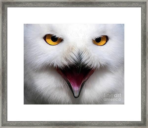 Owlsome Framed Print
