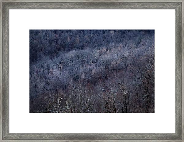 Ozark Trees #3 Framed Print