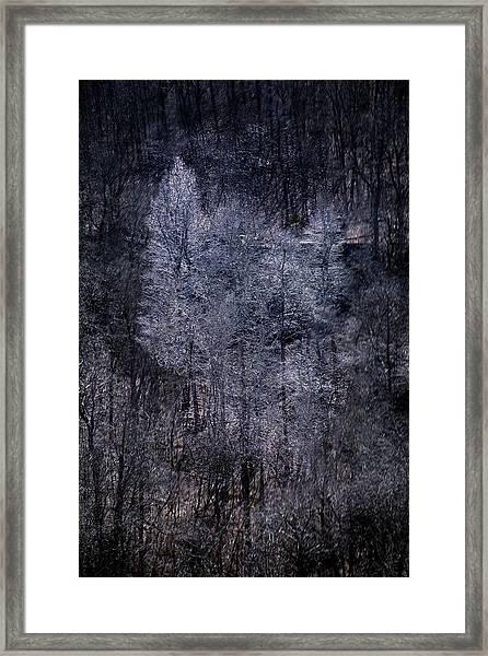 Ozarks Trees #6 Framed Print