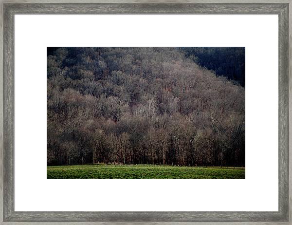 Ozarks Trees Framed Print