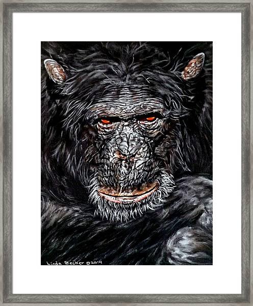 Pablo Framed Print