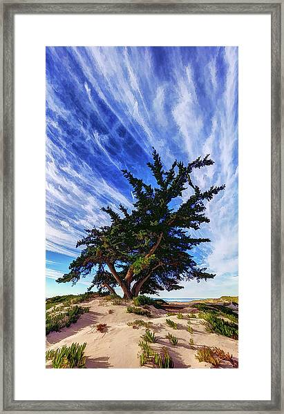 Pacific Beach Juniper Framed Print