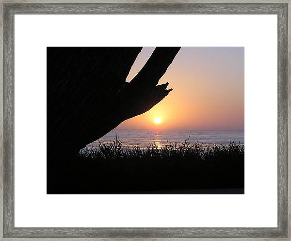 Pacific Cypress Sunset Framed Print by Richard Mansfield