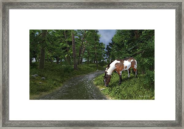 Paint Horse By The Forest Stream Framed Print