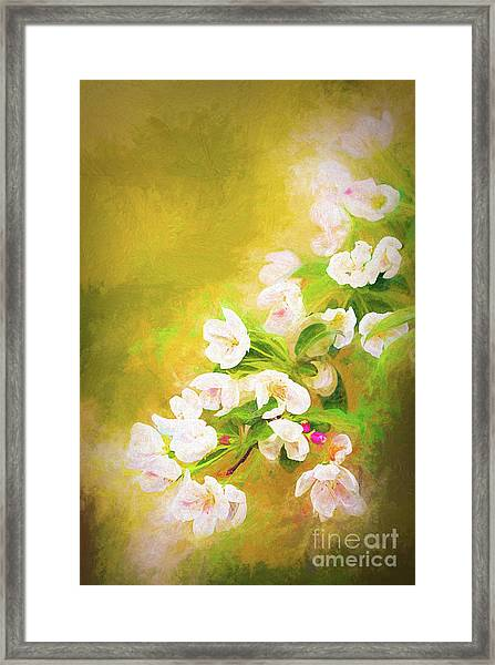Painted Crabapple Blossoms In The Golden Evening Light Framed Print