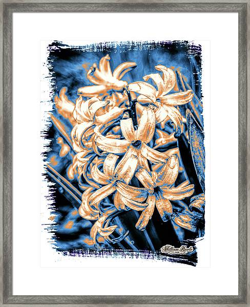 Framed Print featuring the digital art Painted Hyacinth by William Havle