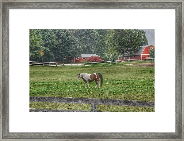 1005 - Painted Pony In Pasture Framed Print