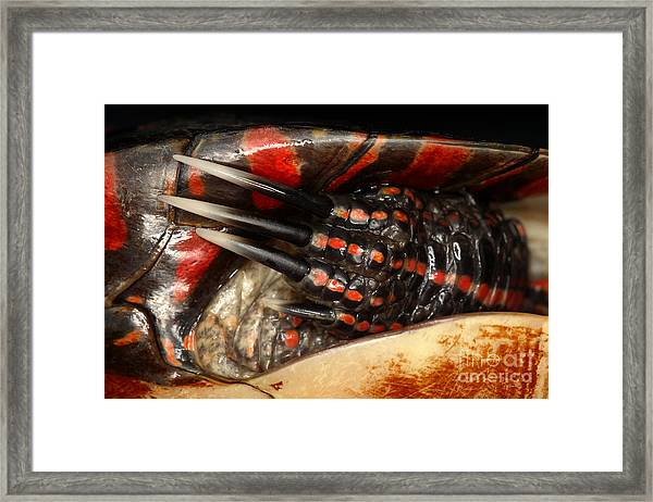 Painted Turtle Claws Framed Print