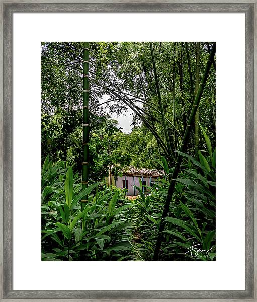 Paiseje Colombiano #10 Framed Print