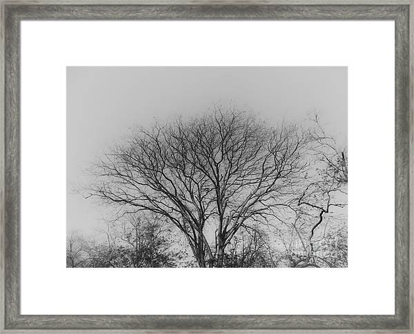 Pale Shades Framed Print