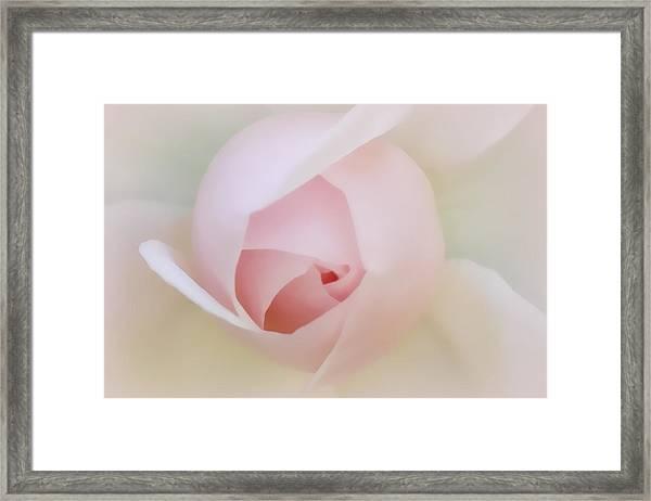 Palest Of Pink Framed Print